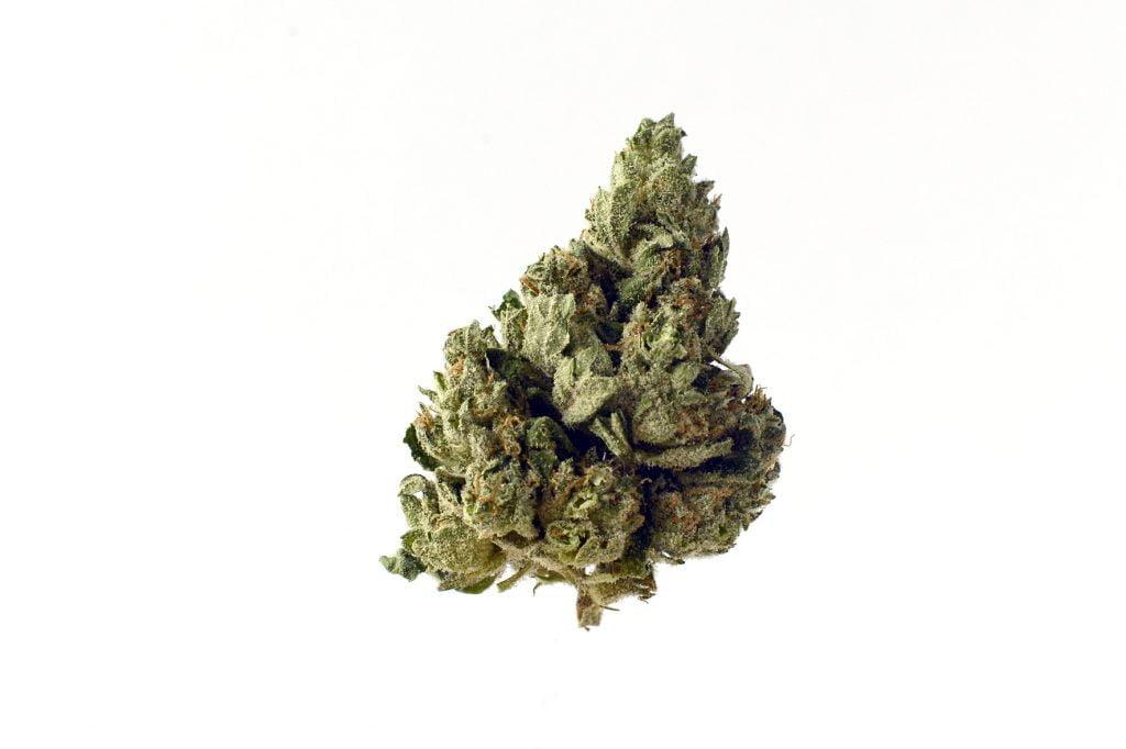 Amsterdam Genetics - Choco Kush Autoflower (5 seeds pack)