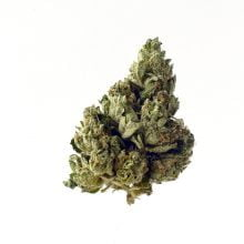 Amsterdam Genetics - Choco Kush Autoflower (5 seeds pack)