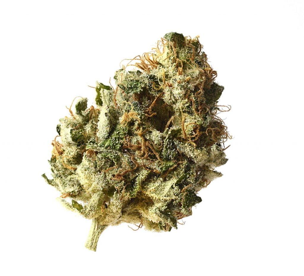 Amsterdam Genetics - Kosher Choco Kush (5 seeds pack)