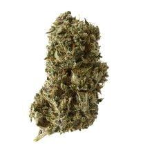 Amsterdam Genetics - Kosher Tangie Kush (5 seeds pack)