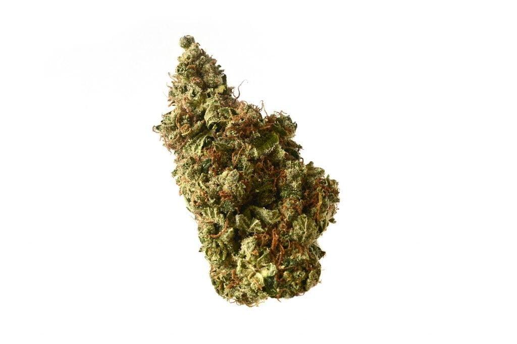 Amsterdam Genetics - Milkshake Kush Autoflower (5 seeds pack)