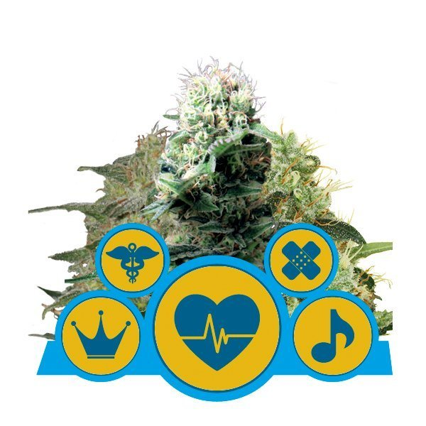 Royal Queen Seeds CBD Mix cannabis seeds (5 seeds pack)