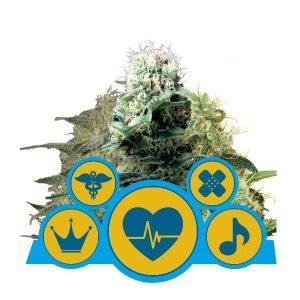 Royal Queen Seeds CBD Mix cannabis seeds (3 seeds pack)