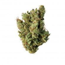Amsterdam Genetics - Super Silver Haze (5 seeds pack)