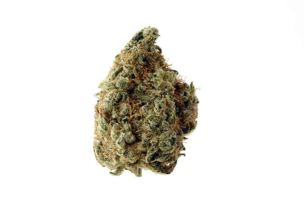Amsterdam Genetics - White Choco (5 seeds pack)