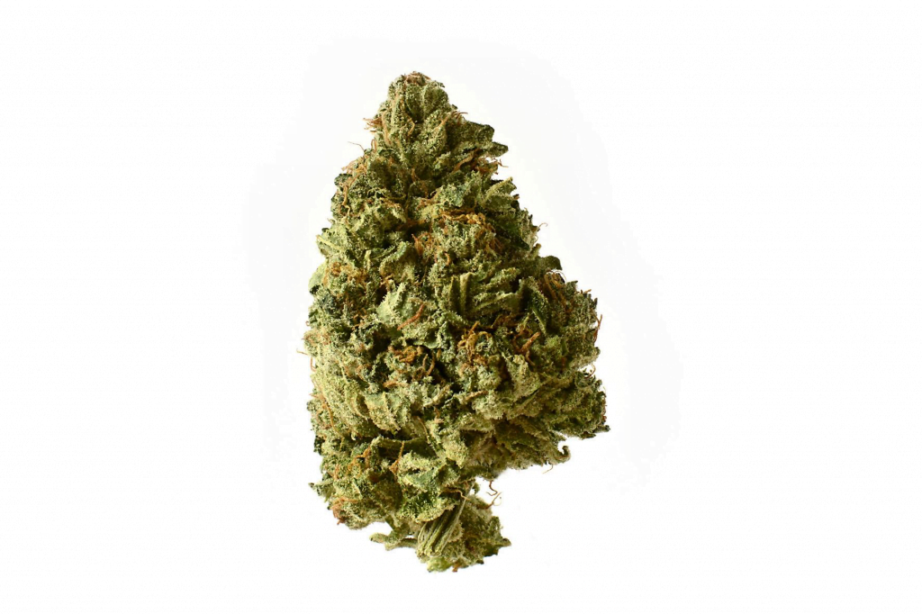 Amsterdam Genetics - White Choco Autoflower (5 seeds pack)