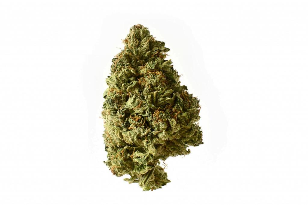 Amsterdam Genetics - White Choco Haze (5 seeds pack)