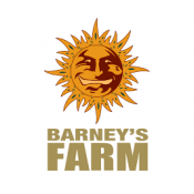 Barney's Farm CBD Seeds