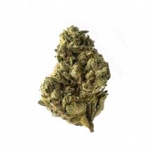 Amsterdam Genetics - Strawberry Glue (5 seeds pack)