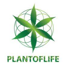 Plant of Life Oli di CBD