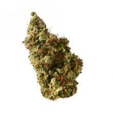 Amsterdam Genetics - Milkshake Kush Autoflower (confezione 5 semi)
