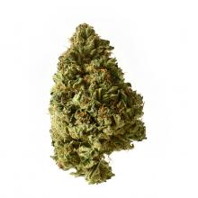Amsterdam Genetics - White Choco Autoflower (confezione 5 semi)